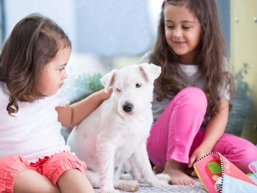Hund und Baby - das musst Du beachten